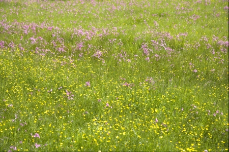 grass plot: Alps meadow Stock Photo