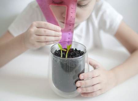 Hand measuring height of seed pods germination. The little child cultivates the land around the green young seedling. Caring for a new life. Earth day holiday concept. World Environment Day