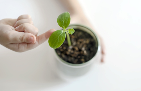 Baby hands holding green small plant. Caring for a new life. The childs hands. Selective focus. Earth day holiday. World Environment Day. Care and save world, ecology concept Reklamní fotografie
