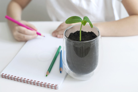 A child writes in an empty notebook. Kid looking at plant seedling. Biology class. ucumber leaves. Ecology concept Reklamní fotografie