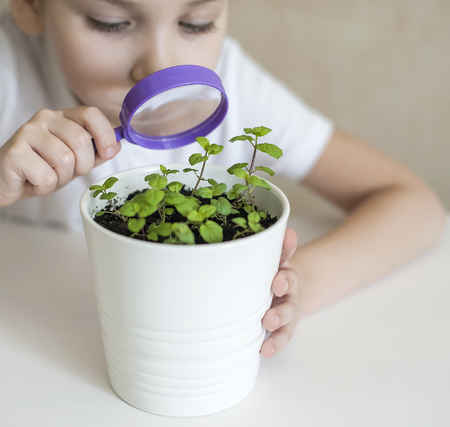 Young girl studies small plant in elementary science class. Child holding magnifying glass. Caring for a new life. The childs hands. Selective focus. Earth day holiday concept. World Environment Day