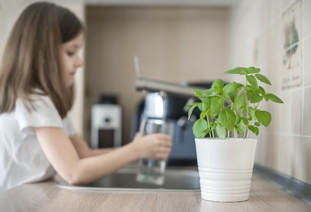 Little girl is holding a transparent glass with water and watering plant Basil (Ocimum Basilicum). Caring for a new life. Hand nurturing young baby plants growing on fertile soil. Gardening concept