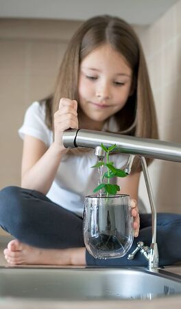 Beautiful little girl is holding a glass with pea (Pisum sativum), watering young green plant. Caring for a new life. Child's hands. Selective focus. Earth day holiday concept. World Environment Day Фото со стока