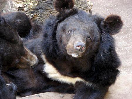 bear Imagens - 859432
