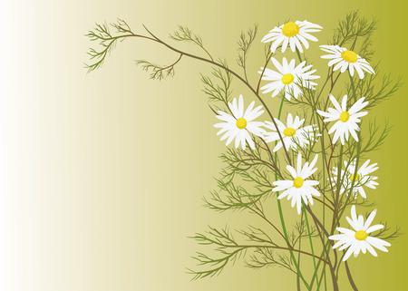 flourishing: chamomile Illustration