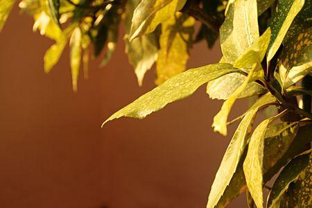 spotty: Spotty leaf