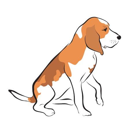 cachorro beagle en el fondo blanco