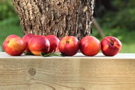 ripe nectarines near to a tree photo