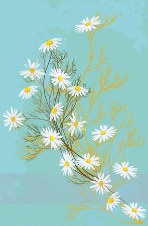 background with white chamomiles. Illusztráció
