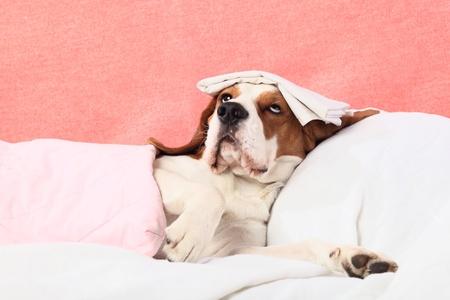 malade au lit: Tr�s bien la t�te est malade.