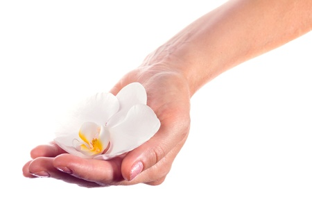 Female hand with orchid on a white background. photo