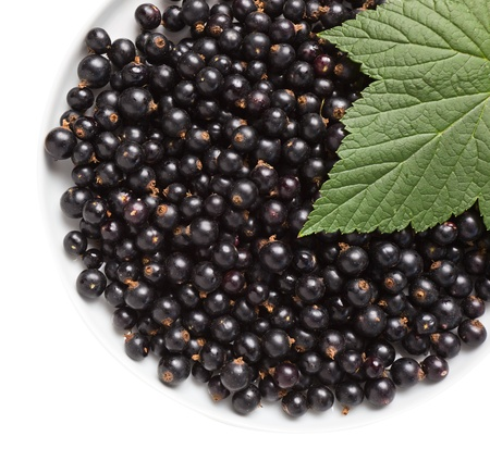 black currant,saved clipping path. Stock Photo - 10047289