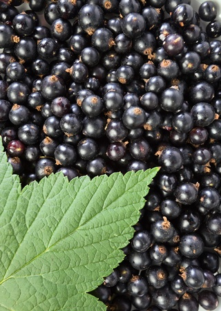 black currant,ripe berries and green leaf. photo