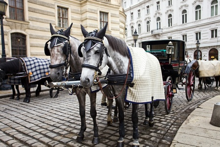 Horses waiting to whisk tourists around the beautiful city of Vienna. Spanish Riding School built in 1735 as an extension to the Hofburg Palace complex (13th Century).
