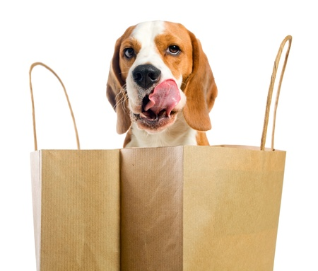 pack animal: Licking lips dog before an open paper bag.