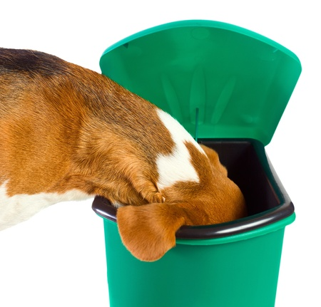 garbage can: The dog checks a green garbage can Stock Photo