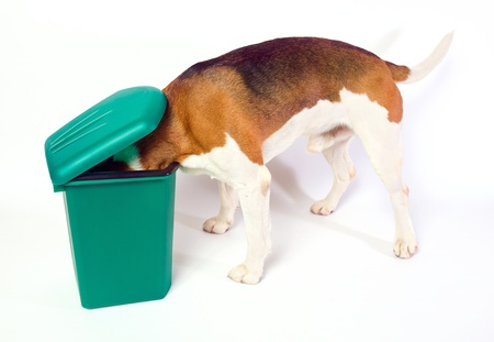 garbage can: What news? The dog checks a green garbage can. Stock Photo