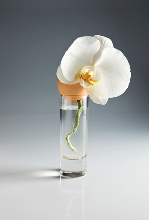 Egg and orchid in glass with water . Stock Photo - 12477005