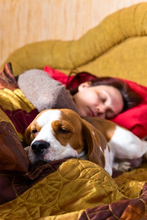 The sleeping woman and its dog , focus on a dog. Stock Photo - 12848244