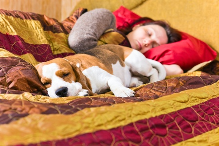 The sleeping woman and its dog , focus on a dog. Stock Photo - 12848246