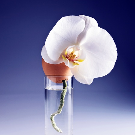 Egg and orchid in glass with water . photo