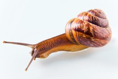 Snail on a white glass, macro shot. Stock Photo - 13292674