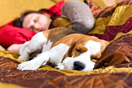The sleeping woman and its dog , focus on a dog. Stock Photo - 13434950