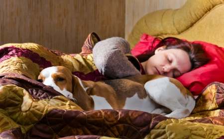 The sleeping woman and its dog , focus on a dog. Stock Photo - 13758021