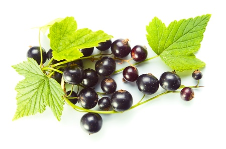 black currants: black currant, ripe berries and green leaves on a white background