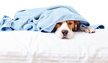 Very much sick dog , isolated on a white background