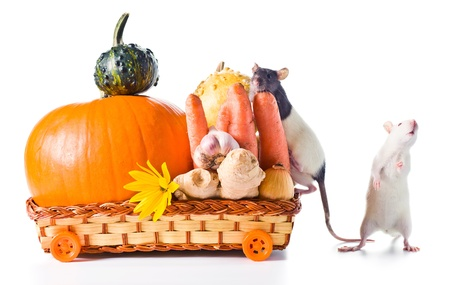 rat and vegetables for preparation of pumpkin soup . white background photo