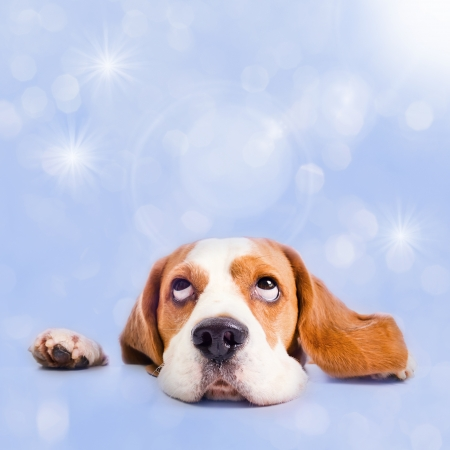The dog dreams of Christmas gifts