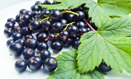 black currant: black currant, ripe berries and green leaves.