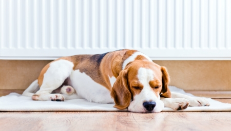 The dog has a rest on wooden to a floor near to a warm radiator Stock Photo - 16000765
