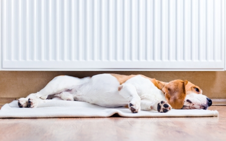 The dog has a rest on wooden to a floor near to a warm radiator Stock Photo - 16000766