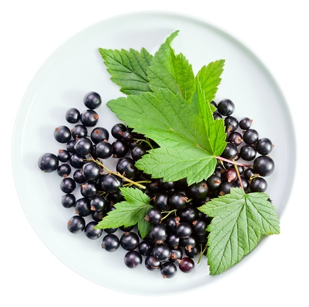 black currant, ripe berries and green leaves isolated on a white background photo