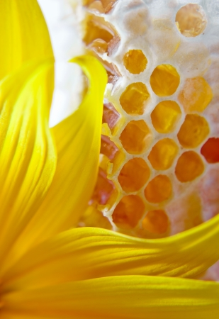 sweet honeycomb with honey and yellow flower photo