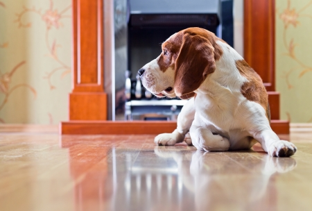 The dog has a rest on wooden to a floor near to a fireplace Stock Photo - 17893878