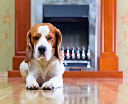 The dog has a rest on wooden to a floor near to a fireplace Stock Photo - 17893865