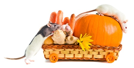 rats with ripe vegetables on a  white background photo