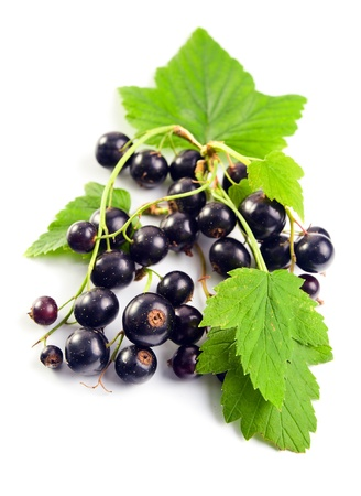 black currant, ripe berries and green leaves on a white background