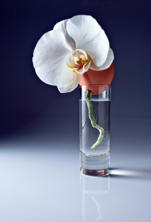 Egg and orchid in glass with water  photo