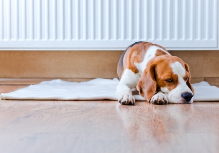 The dog has a rest on wooden to a floor near to a warm radiator Stock Photo - 21586217