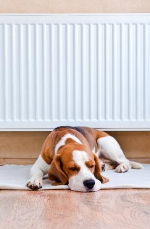 De hond heeft een rust op houten aan een vloer in de buurt van een warme radiator