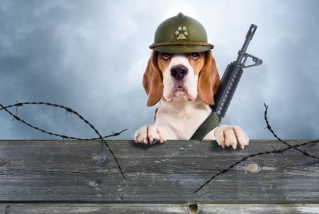非常にヘルメットの歩哨犬を注意深く観察します。 写真素材