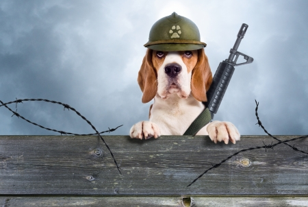 The sentry dog in a helmet very attentively observes Stock Photo - 22392689