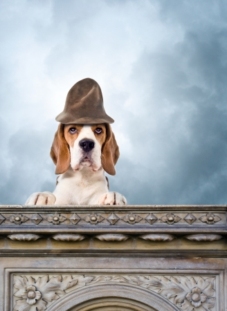 Dog in a magic hat against the storm sky