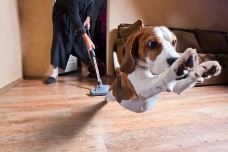 아주 끔찍한 진공 청소기, 개 머리에 초점 스톡 콘텐츠