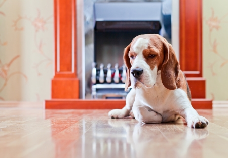 The dog has a rest on wooden to a floor near to a fireplace Stock Photo - 22967398