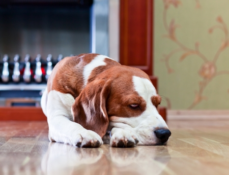 The dog has a rest on wooden to a floor near to a fireplace Stock Photo - 22967399